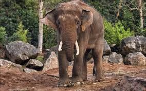 Hindu Elephant HD (Page 1) - Line.17QQ.com