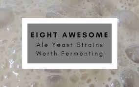 Eight Awesome Ale Yeast Strains Worth Fermenting Newtobrew
