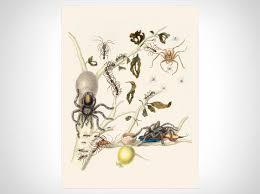 Metamorphosis Insectorum Surinamensium Iv Art Prints Naturalis