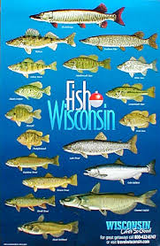 Fish Of North America Collection Of 29 Posters Includes 4