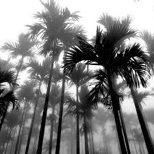 palms in black and white pixdaus palm trees tumblr48 and