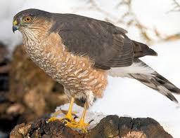 Different Types Of Birds Of Prey