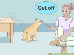image titled keep cats off furniture step 11