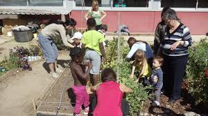 essay on environmental education environmental education volunteering boston tutoring services