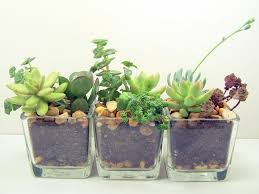 small plants for office. Furniture:Plant Glass Pot White Plant Vase House Plants In Containers Mini Flower Small For Office