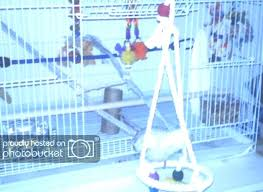 bird rope perch this is a picture of the perches in cage diy