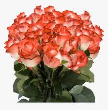 orange colour rose flowers hd png