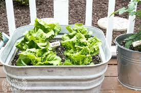 container garden vegetables. Easy Container Gardening | Vegetables And Herbs Tips For Growing A Garden In Containers.