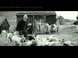 specsavers advert sheepdog