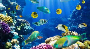 3D Fish Desktop Wallpapers - Top Free ...