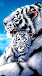 white tiger iphone 5 wallpaper. Wonderful White WHITE TIGER IPHONE WALLPAPER BACKGROUND Animal Gato Wallpaper Lion  Tiger Wallpaper On White Iphone 5