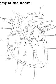 Human Heart Coloring Pages Heart Coloring Pages To Print S Human