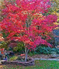 Good Trees For The LandscapeGood Trees For Backyard