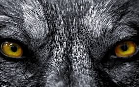 Angry Lion Eyes Wallpapers - Wallpaper Cave