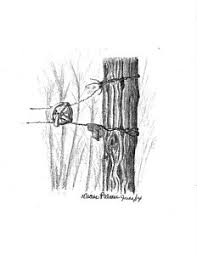 wood fence drawing. Wood Fence Drawing - Old Clothesline By Diane Palmer G