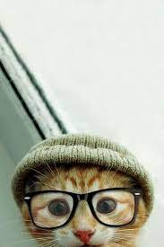 Hipster Kitten Wallpapers - Top Free ...