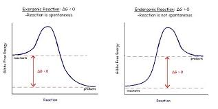 Enzyme Chart Structural Biochemistry Enzyme Gibbs Free Energy Graph
