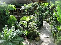 Small Picture 34 best fernery ideas images on Pinterest Ferns Native plants