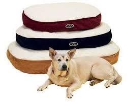 popular dog beds