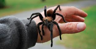 Most state spiders harmless to people   Ag / Energy   enidnews.com