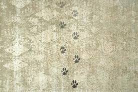 pet proof rugs maintain your pet proof rugs pet proof rugs australia pet proof rugs