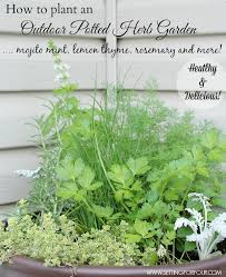 outdoor herb garden. How To Plant An Easy Outdoor Potted Herb Garden And Tips For Planting Taming Invasive