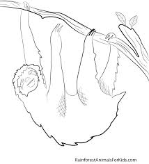 Printable Coloring Pages Of Rainforest Animals Rainforest Animals