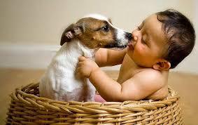 Animali e neonati: vivere con un cucciolo provoca asma nel bebè?