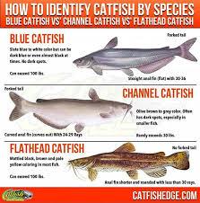 Mississippi Fish Identification Chart