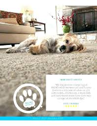 pet stain resistant carpet pet proof carpet best stain resistant rated in customer satisfaction is an pet stain resistant carpet