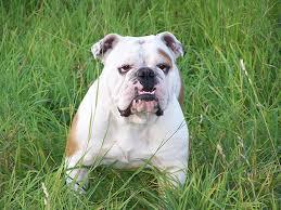 Dog Allergies Tips Dog Benadryl Dosage Chart