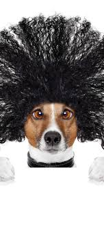面白い犬髪型白い背景 1242x2688 Iphone Xs Max 壁紙背景画像