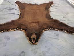 colorado brown phase black bear rug mount craig colorado