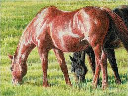 horse drawing in color. Brilliant Drawing Drawingredhorse07carrielewis Throughout Horse Drawing In Color I