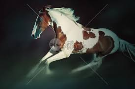 paint horses running in a field. Modren Paint Paint Horse Running Paint Outside Outdoor One Nice Nature Moving Movement  Meadow Mare Mammal Landscape In Intended Horses In A Field E