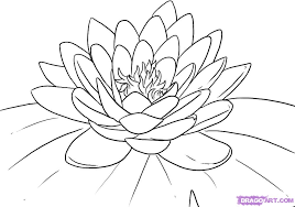 Small Picture Lily Pad Coloring Page Coloring Pages Gallery