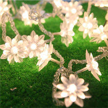 <b>lotus flower fairy</b>