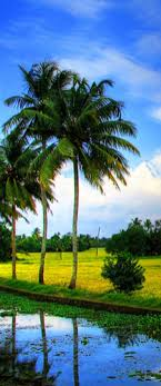 34 best A TRAVEL TO KERALA WITH DREAM HOLIDAYS images on Pinterest ...