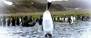 simple resume dante a collection of critical essays third grade love penguins sneaux days essay penguins