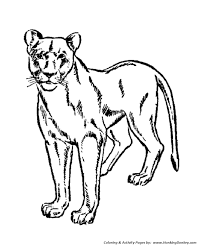 Wild Animal Coloring Pages Female Lion Lioness Coloring Page And