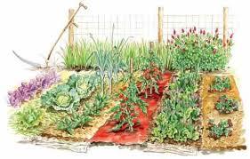 mulched garden mulches