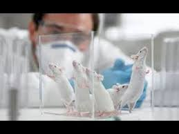 pros and cons of animal testing