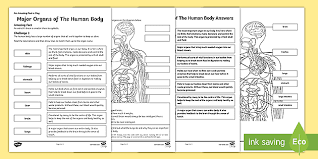 Work sheet and exercise in thetopic: Ks2 Main Organs Of The Human Body Worksheet With Ar