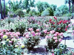 sahuaro ranch park glendale az beautiful small rose garden