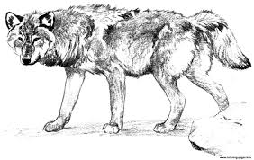 Small Picture Wolf Alone Coloring Pages Printable