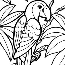 Small Picture Parrot Bird Coloring Page Clipart Panda Free Clipart Images
