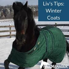 liv s tip of the month winter coats