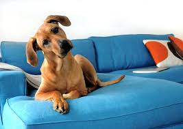dog on couch dog on sofa feature image 2 dog couch cover bed dog on couch