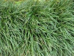 very tall grass texture Quality textures