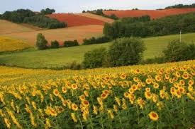 За втручанням Біловодського відділу Старобільської місцевої прокуратури припинено незаконне користування землею вартістю понад 10 мільйонів гривень